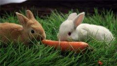 成都种兔航空托运